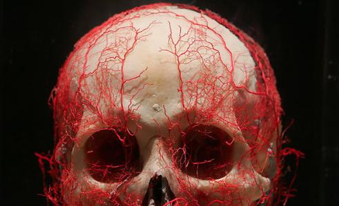 doorbloeding van de schedel