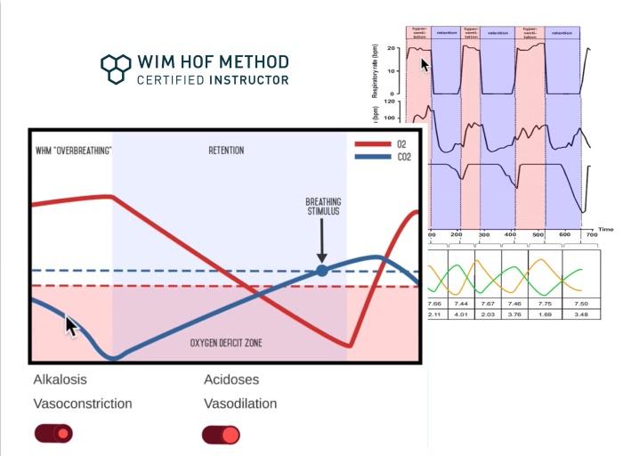 Wim Hof Methode Theorie